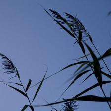 grass_blade