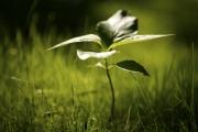 plant_jpeg