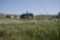 grass_and_house